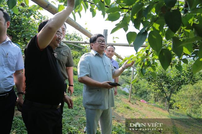 Đồng chí Thào Xuân Sùng: Đánh giá cao mô hình trồng hoa hồng của xã Sìn Hồ - Ảnh 4.