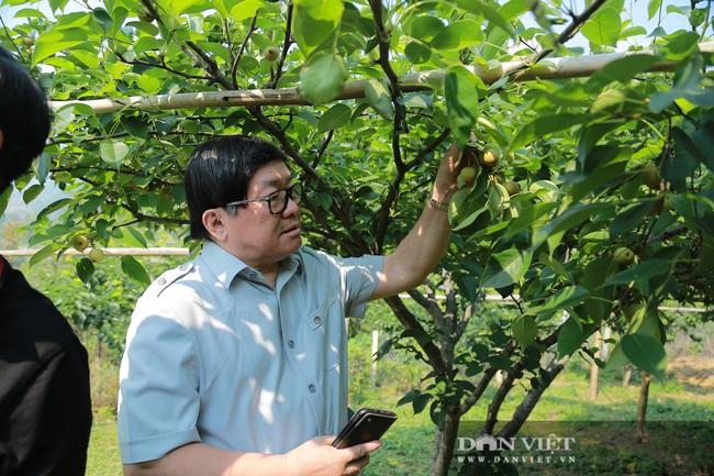Đồng chí Thào Xuân Sùng: Đánh giá cao mô hình trồng hoa hồng của xã Sìn Hồ - Ảnh 5.