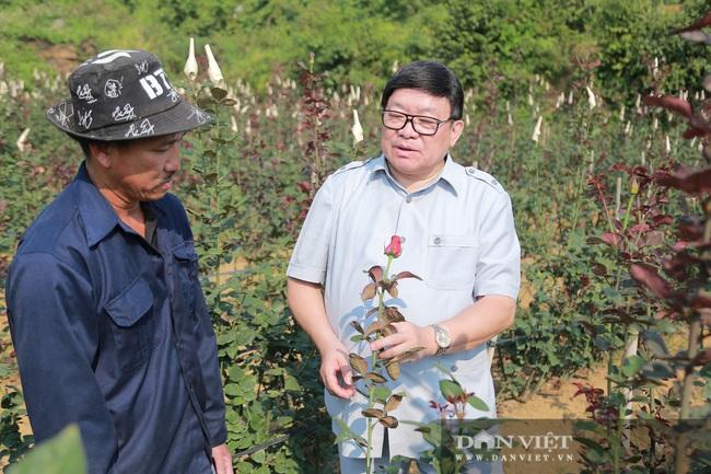 Đồng chí Thào Xuân Sùng: Đánh giá cao mô hình trồng hoa hồng của xã Sìn Hồ - Ảnh 6.