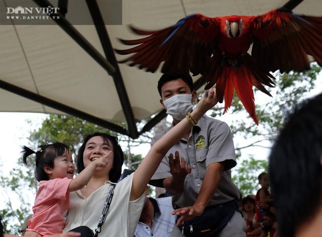 Chiêm ngưỡng hàng trăm chú chim lông vũ khắp thế giới.... hội tụ tại Phú Quốc - Ảnh 3.