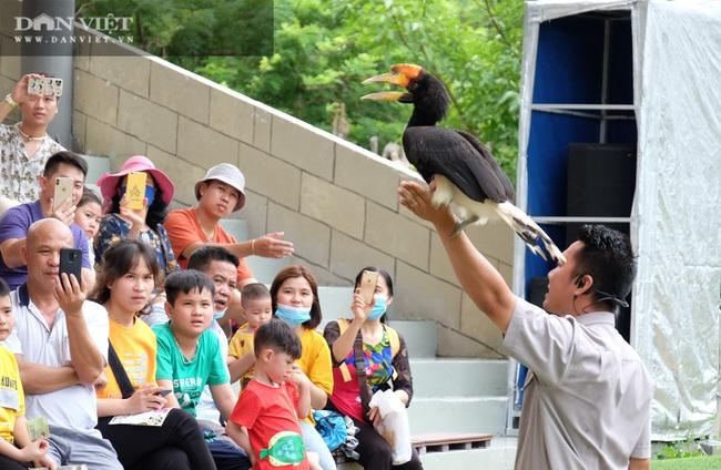 Chiêm ngưỡng hàng trăm chú chim lông vũ khắp thế giới.... hội tụ tại Phú Quốc - Ảnh 8.