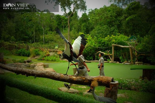 Chiêm ngưỡng hàng trăm chú chim lông vũ khắp thế giới.... hội tụ tại Phú Quốc - Ảnh 21.