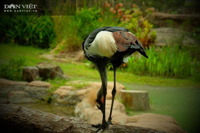 Chiêm ngưỡng hàng trăm chú chim lông vũ khắp thế giới.... hội tụ tại Phú Quốc - Ảnh 6.