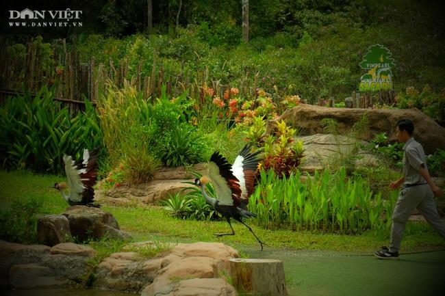 Chiêm ngưỡng hàng trăm chú chim lông vũ khắp thế giới.... hội tụ tại Phú Quốc - Ảnh 20.