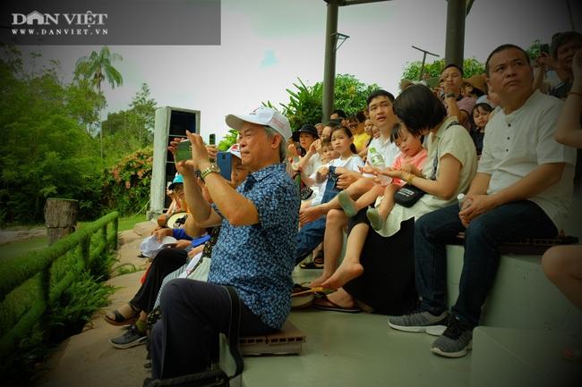 Chiêm ngưỡng hàng trăm chú chim lông vũ khắp thế giới.... hội tụ tại Phú Quốc - Ảnh 19.