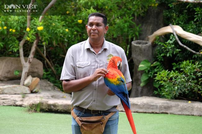 Chiêm ngưỡng hàng trăm chú chim lông vũ khắp thế giới.... hội tụ tại Phú Quốc - Ảnh 5.