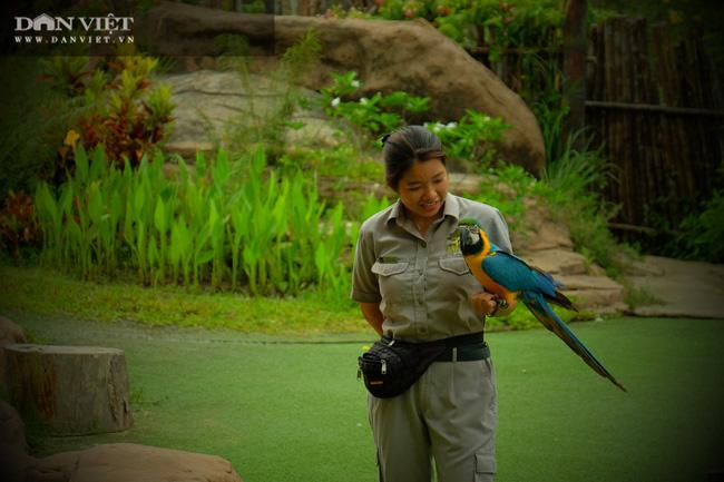 Chiêm ngưỡng hàng trăm chú chim lông vũ khắp thế giới.... hội tụ tại Phú Quốc - Ảnh 17.