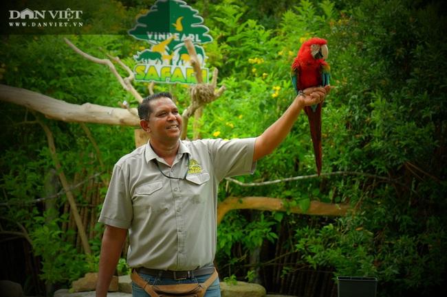 Chiêm ngưỡng hàng trăm chú chim lông vũ khắp thế giới.... hội tụ tại Phú Quốc - Ảnh 16.