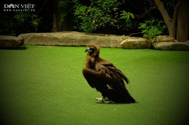 Chiêm ngưỡng hàng trăm chú chim lông vũ khắp thế giới.... hội tụ tại Phú Quốc - Ảnh 14.