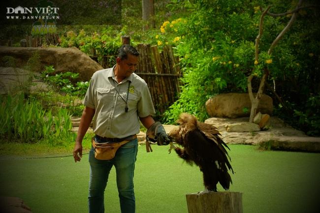 Chiêm ngưỡng hàng trăm chú chim lông vũ khắp thế giới.... hội tụ tại Phú Quốc - Ảnh 13.