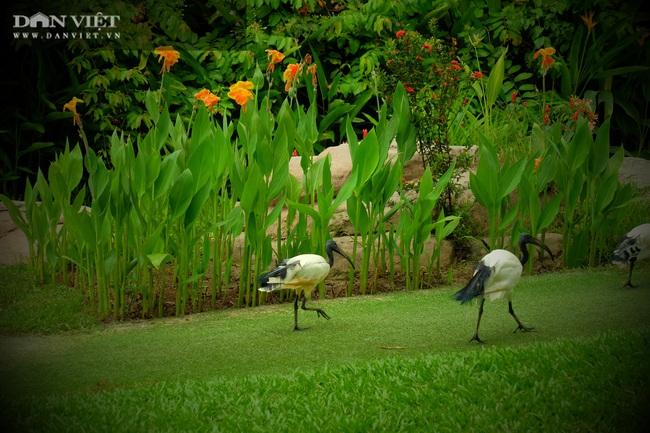 Chiêm ngưỡng hàng trăm chú chim lông vũ khắp thế giới.... hội tụ tại Phú Quốc - Ảnh 12.