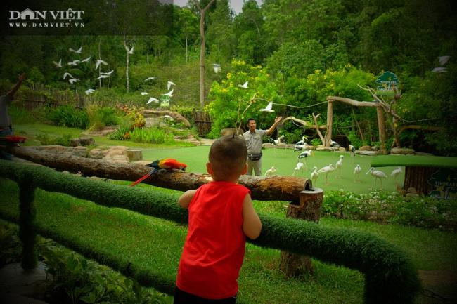 Chiêm ngưỡng hàng trăm chú chim lông vũ khắp thế giới.... hội tụ tại Phú Quốc - Ảnh 1.