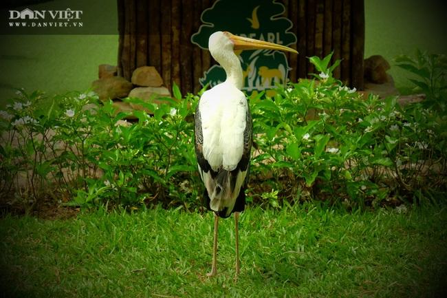Chiêm ngưỡng hàng trăm chú chim lông vũ khắp thế giới.... hội tụ tại Phú Quốc - Ảnh 11.