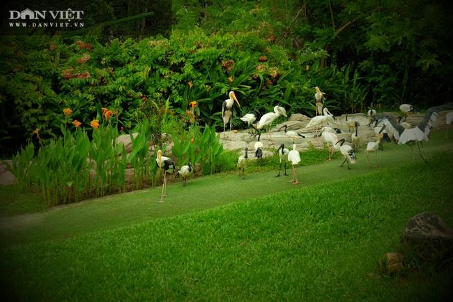 Chiêm ngưỡng hàng trăm chú chim lông vũ khắp thế giới.... hội tụ tại Phú Quốc - Ảnh 10.