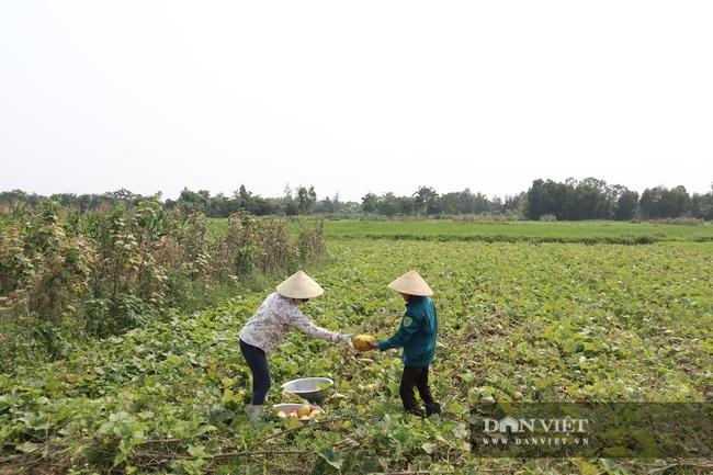Nghệ An: Trồng cây ra quả nứt toe toét thu hàng chục triệu đồng trên một sào nông dân phấn khởi vui mừng - Ảnh 1.