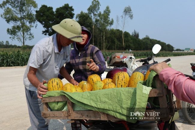 Nghệ An: Trồng cây ra quả nứt toe toét thu hàng chục triệu đồng trên một sào nông dân phấn khởi vui mừng - Ảnh 3.