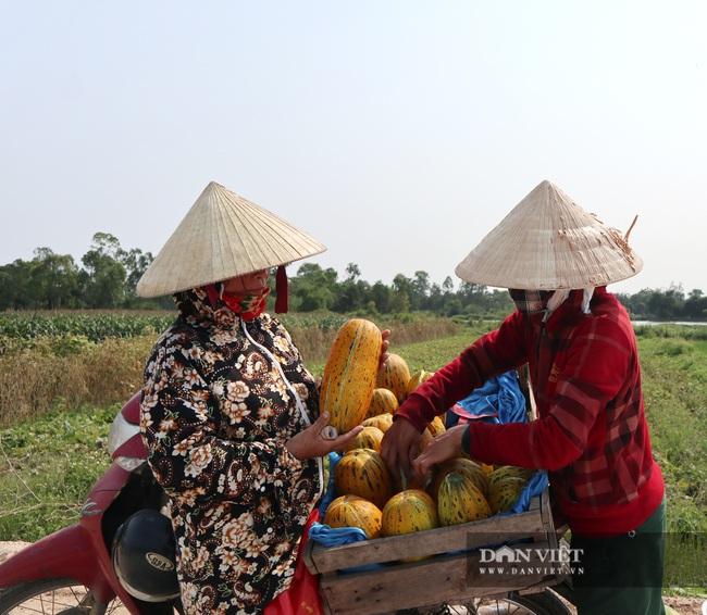 Nghệ An: Trồng cây ra quả nứt toe toét thu hàng chục triệu đồng trên một sào nông dân phấn khởi vui mừng - Ảnh 2.