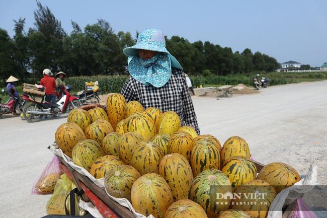 Nghệ An: Trồng cây ra quả nứt toe toét thu hàng chục triệu đồng trên một sào nông dân phấn khởi vui mừng - Ảnh 4.