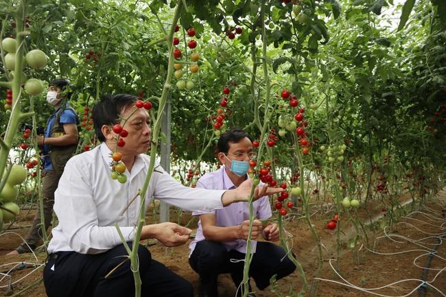 Hội Nông dân Nghệ An: Xây dựng 4 mô hình điểm về sản xuất, chế biến nông sản an toàn   - Ảnh 2.