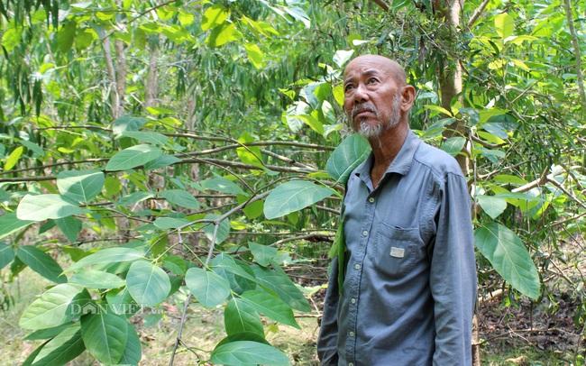 Lão nông trồng 200ha rừng trên đất biên cương - Ảnh 1.
