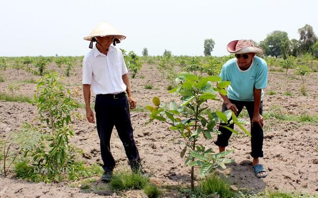 Lão nông trồng 200ha rừng trên đất biên cương - Ảnh 3.