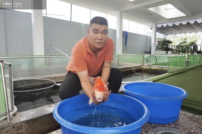"""Từ niềm đam mê với loài cá là quốc ngư của Nhật Bản, 8X Đà Nẵng trở thành """"ông trùm cá Koi"""" - Ảnh 1."""