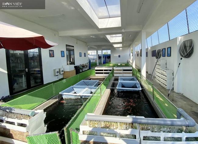 """Từ niềm đam mê với loài cá là quốc ngư của Nhật Bản, 8X Đà Nẵng trở thành """"ông trùm cá Koi"""" - Ảnh 3."""