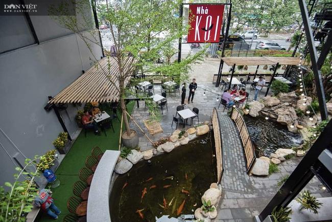 """Từ niềm đam mê với loài cá là quốc ngư của Nhật Bản, 8X Đà Nẵng trở thành """"ông trùm cá Koi"""" - Ảnh 4."""