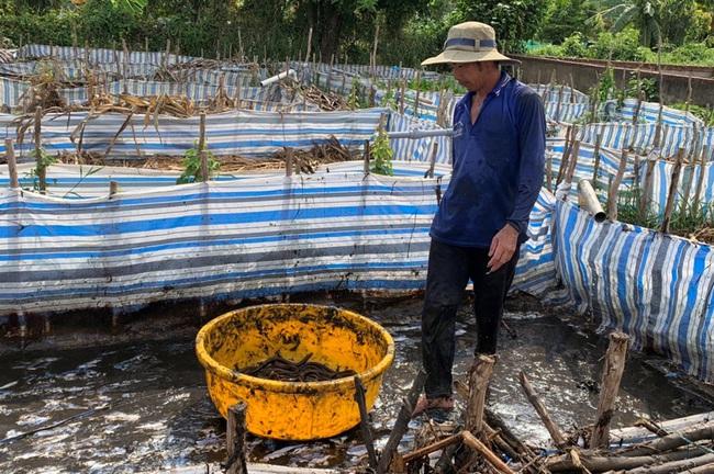 Quỹ hội tiếp sức mô hình nuôi lươn, trồng cây ăn trái - Ảnh 1.