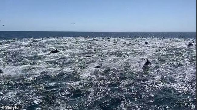 """Trải nghiệm để đời - chứng kiến cảnh cả ngàn con cá heo """"tháo chạy tán loạn"""" - Ảnh 4."""