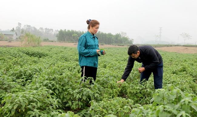 Trồng thứ cây cho mùi thơm đặc biệt hiệu quả cao gấp 3-4 lần trồng ngô, sắn, nông dân ở đây trồng không kịp bán - Ảnh 1.