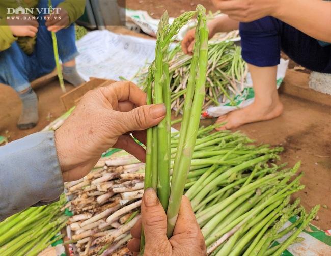 """Clip: Nông dân Nghệ An trồng giống rau """"hoàng đế"""", cứ sáng ra cầm chắc 1 triệu đồng - Ảnh 7."""