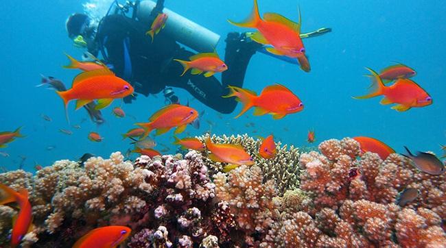 """Quần đảo Virgin thuộc Anh - """"viên ngọc ẩn"""" kỳ thú nhất vùng Caribbea - Ảnh 1."""