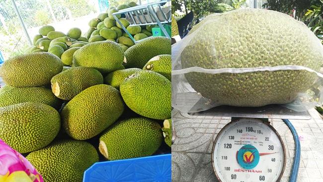 Giá mít Thái hôm nay 6/4: Cách có được vườn mít toàn mít Nhất trên 10 kg/trái, giá mít đã tăng bao nhiêu? - Ảnh 1.