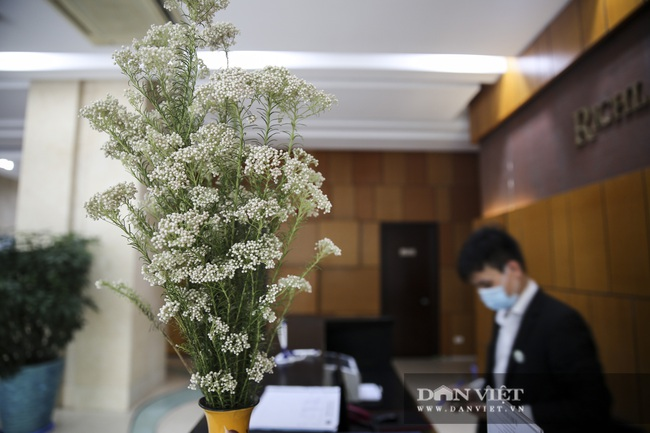 Người Hà Nội phát sốt với loài hoa nhập ngoại mới - Ảnh 10.