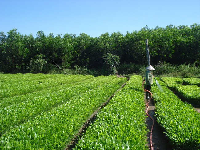 Chuẩn bị cây giống tốt trồng rừng vụ xuân hè - Ảnh 1.