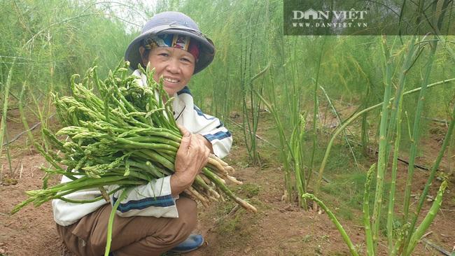 """Nam Định: Trồng rau """"vua"""", ngày nào cũng có mầm mập ú cắt bán, kiếm tiền triệu mỗi ngày - Ảnh 6."""