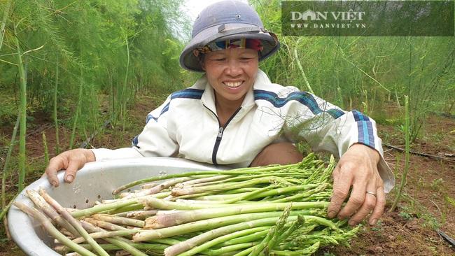 """Nam Định: Trồng rau """"vua"""", ngày nào cũng có mầm mập ú cắt bán, kiếm tiền triệu mỗi ngày - Ảnh 5."""