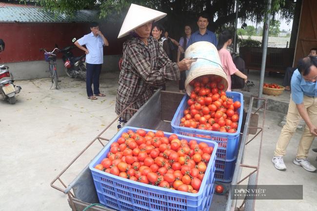 Ninh Bình: Bán 10kg cà chua chưa mua nổi một bát phở - Ảnh 4.