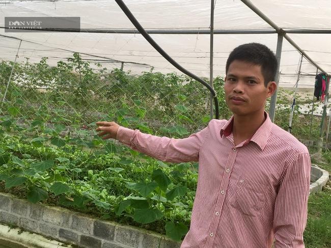 Gác bằng kỹ sư về làm nông nghiệp công nghệ cao lãi 800 triệu/năm - Ảnh 2.