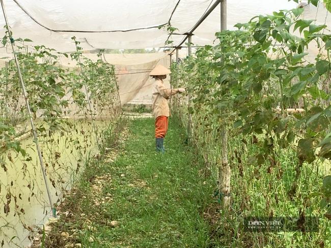 Gác bằng kỹ sư về làm nông nghiệp công nghệ cao lãi 800 triệu/năm - Ảnh 5.