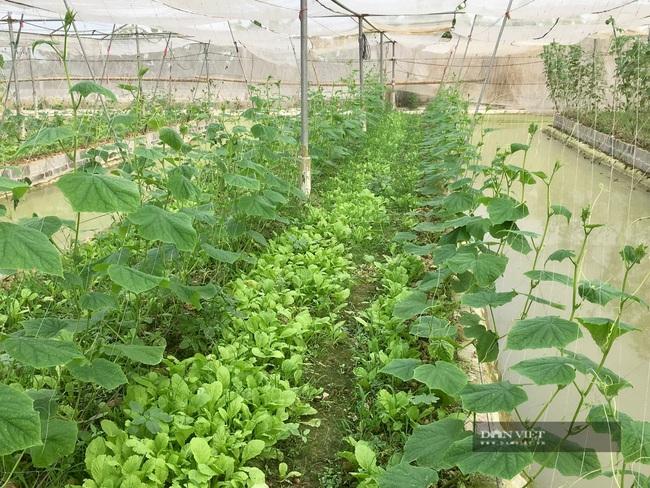 Gác bằng kỹ sư về làm nông nghiệp công nghệ cao lãi 800 triệu/năm - Ảnh 4.