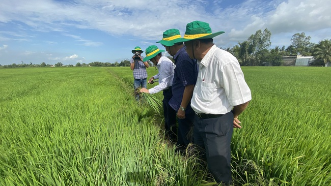 Lợi nhuận từ mô hình canh tác lúa thông minh tăng tới gần 6,7 triệu đồng/ha - Ảnh 3.