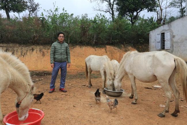 """""""Vén mây"""" đi tìm bạch mã xứ Lạng (kỳ 2): Thong dong vó ngựa ở Khau Sao - Ảnh 1."""