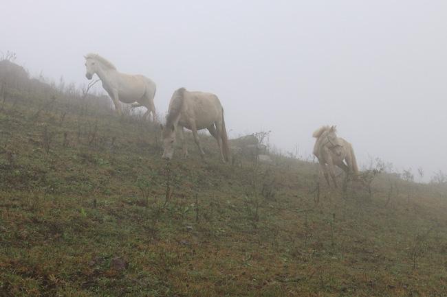 """""""Vén mây"""" đi tìm bạch mã xứ Lạng (kỳ 2): Thong dong vó ngựa ở Khau Sao - Ảnh 3."""