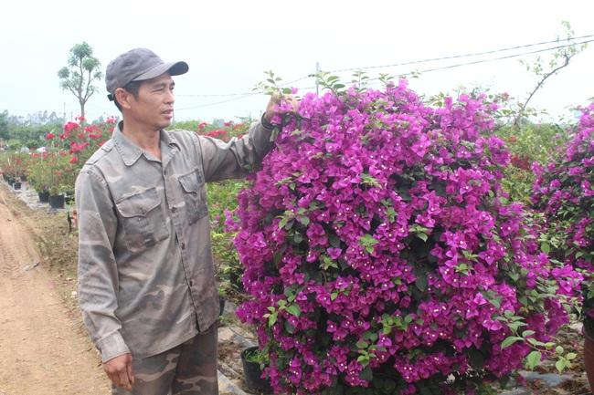 Vào tổ hội, trồng hoa giấy nhanh giàu  - Ảnh 2.
