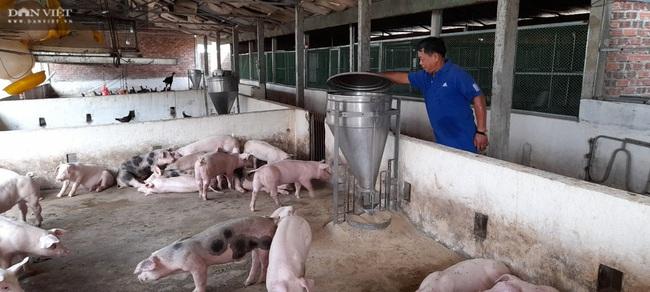 Đà Nẵng: Bác sĩ nghỉ hưu về phụ vợ nuôi lợn lãi hơn 500 triệu đồng/năm - Ảnh 2.
