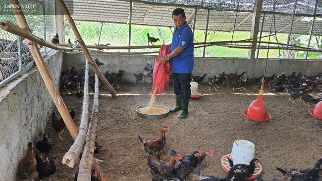 Đà Nẵng: Bác sĩ nghỉ hưu về phụ vợ nuôi lợn lãi hơn 500 triệu đồng/năm - Ảnh 6.