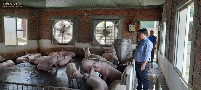 Đà Nẵng: Bác sĩ nghỉ hưu về phụ vợ nuôi lợn lãi hơn 500 triệu đồng/năm - Ảnh 3.