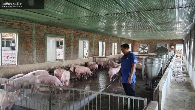 Đà Nẵng: Bác sĩ nghỉ hưu về phụ vợ nuôi lợn lãi hơn 500 triệu đồng/năm - Ảnh 1.